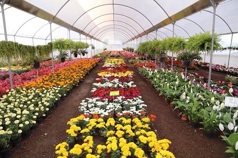 Atlixco pueblo m gico viajes turismo en puebla m xico for Produccion de plantas ornamentales